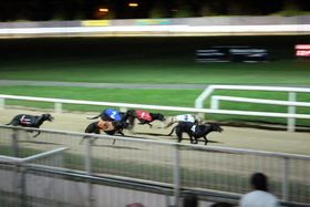 greyhound_race